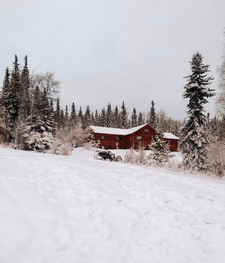 Snow covered pine trees and log cabin in Fairbanks, AK