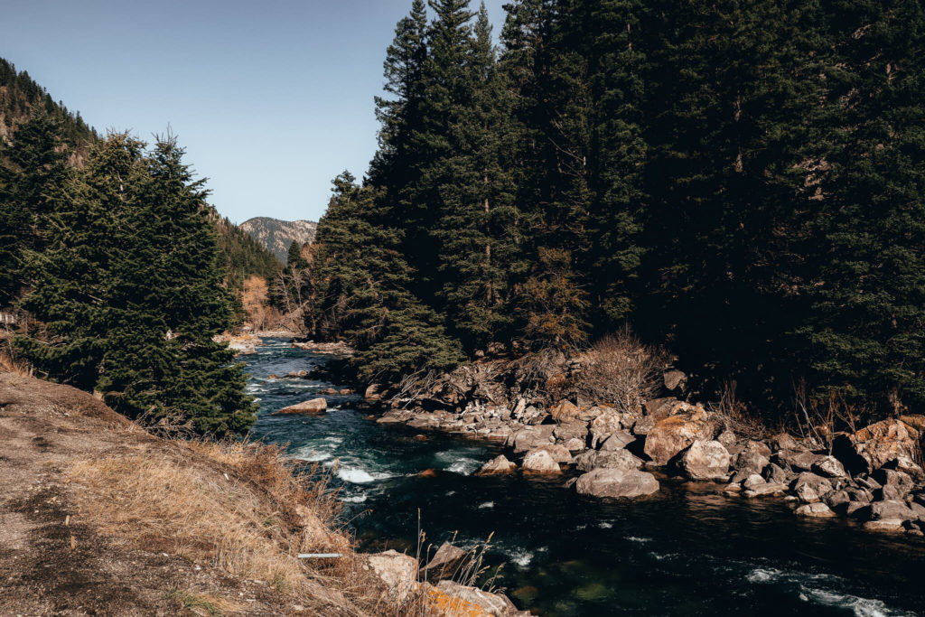 River in Gallatin National Forest